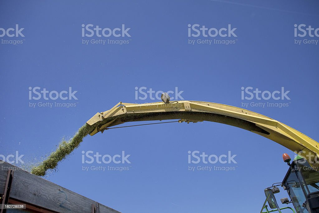 Fresh Hay Blowing into a Truck stock photo
