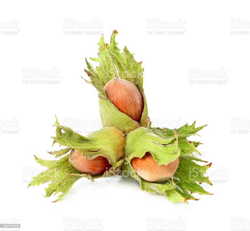 Fresh hazelnut closeup. stock photo
