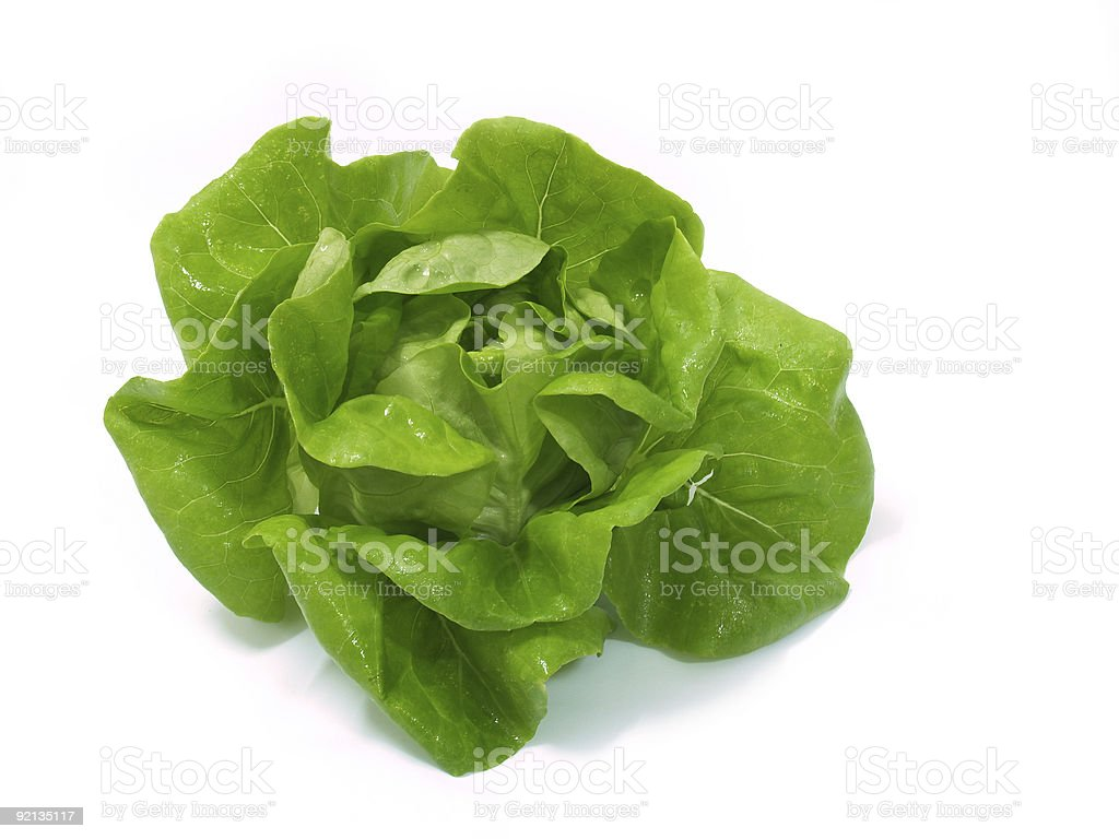Fresh head of lettuce on a white background stock photo