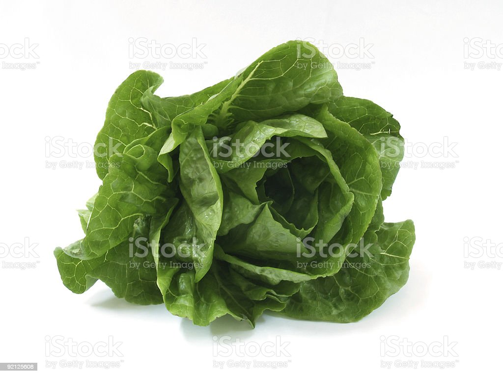 A fresh head of romaine lettuce stock photo