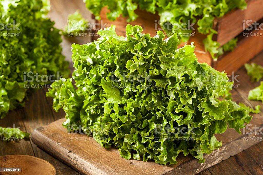 Fresh Healthy Organic Green Leaf Lettuce stock photo