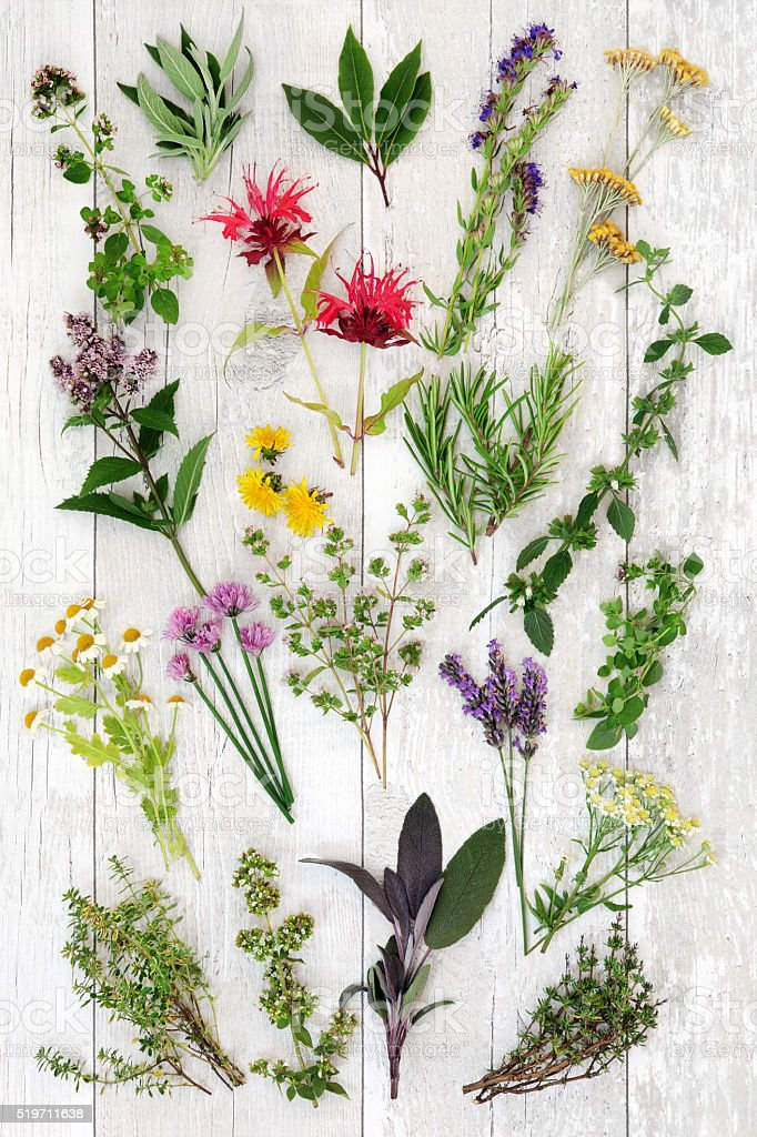 Fresh Herb Abstract Background stock photo