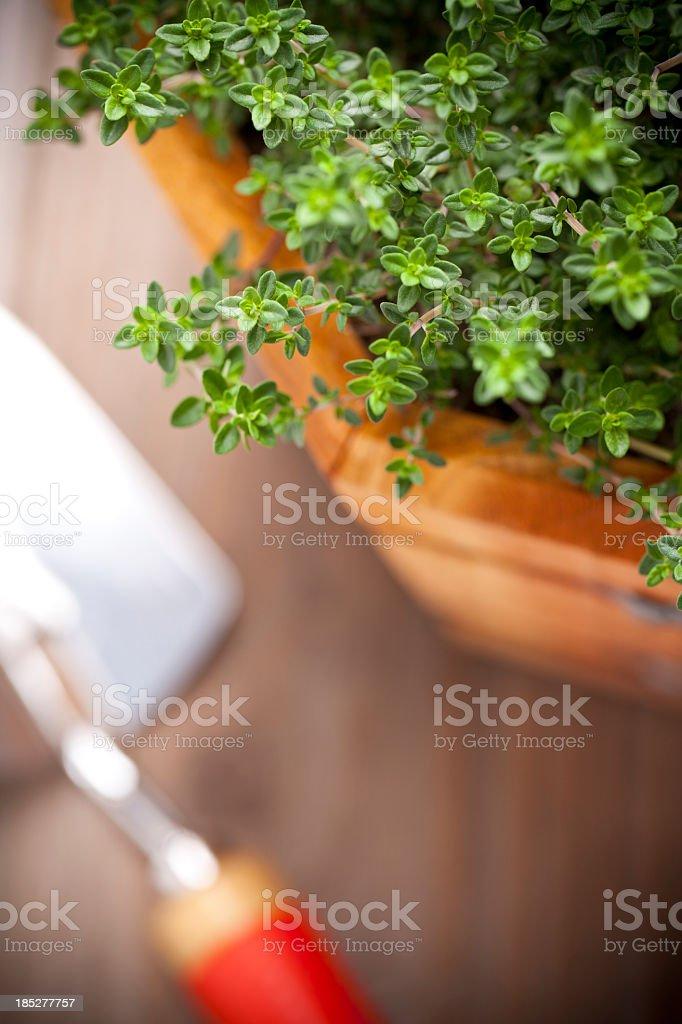 Fresh Herb Garden royalty-free stock photo