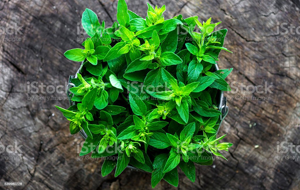 Fresh herb marjoram  on wooden background stock photo