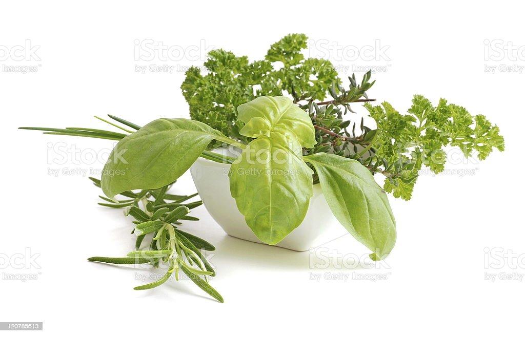 Fresh Herb royalty-free stock photo