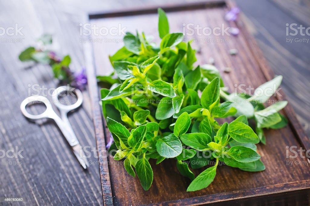 fresh herb stock photo