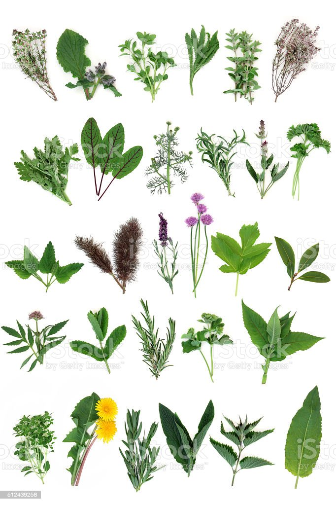 Fresh Herb Selection stock photo
