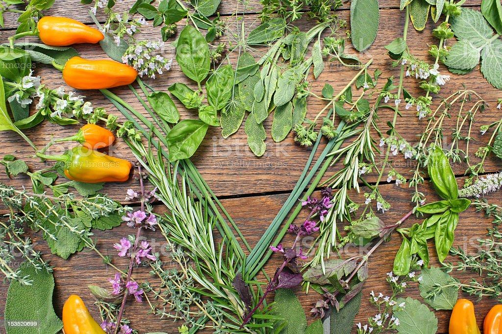 Herbes fraîches et piment photo libre de droits
