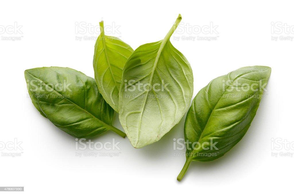 Fresh Herbs: Basil Isolated on White Background stock photo