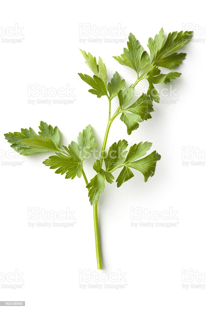 Fresh Herbs: Celery stock photo