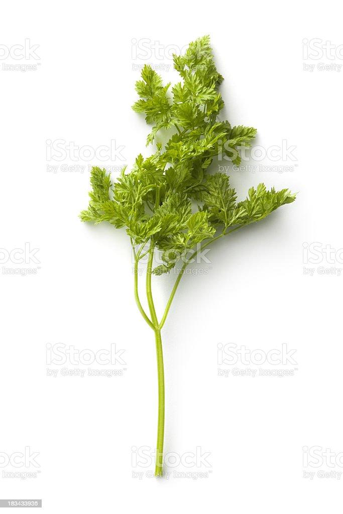 Fresh Herbs: Chervil royalty-free stock photo