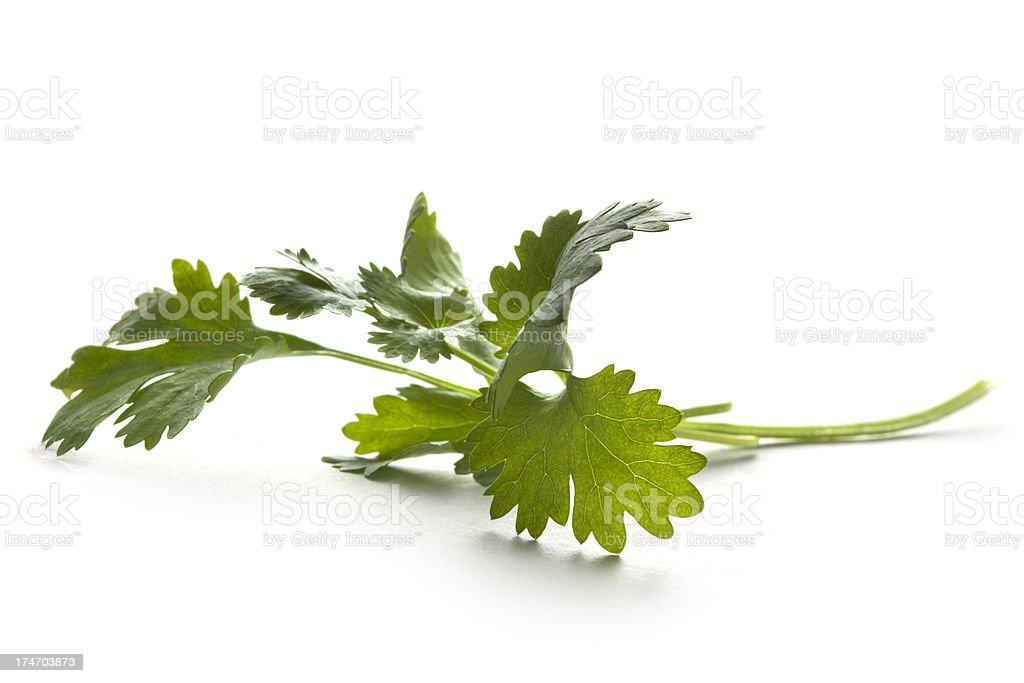 Fresh Herbs: Cilantro Isolated on White Background royalty-free stock photo
