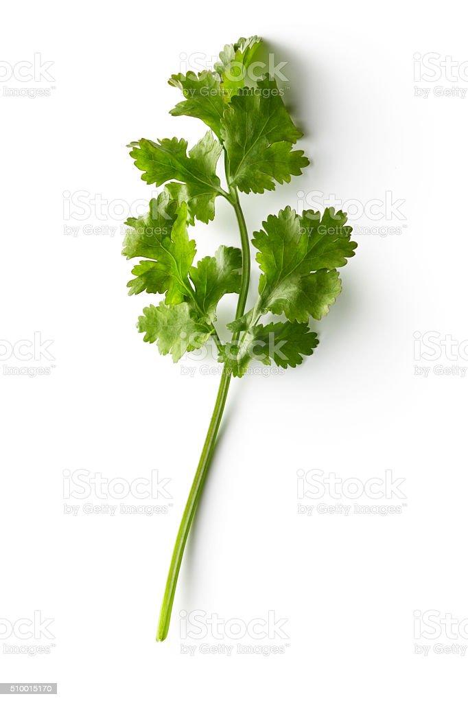 Fresh Herbs: Cilantro Isolated on White Background stock photo