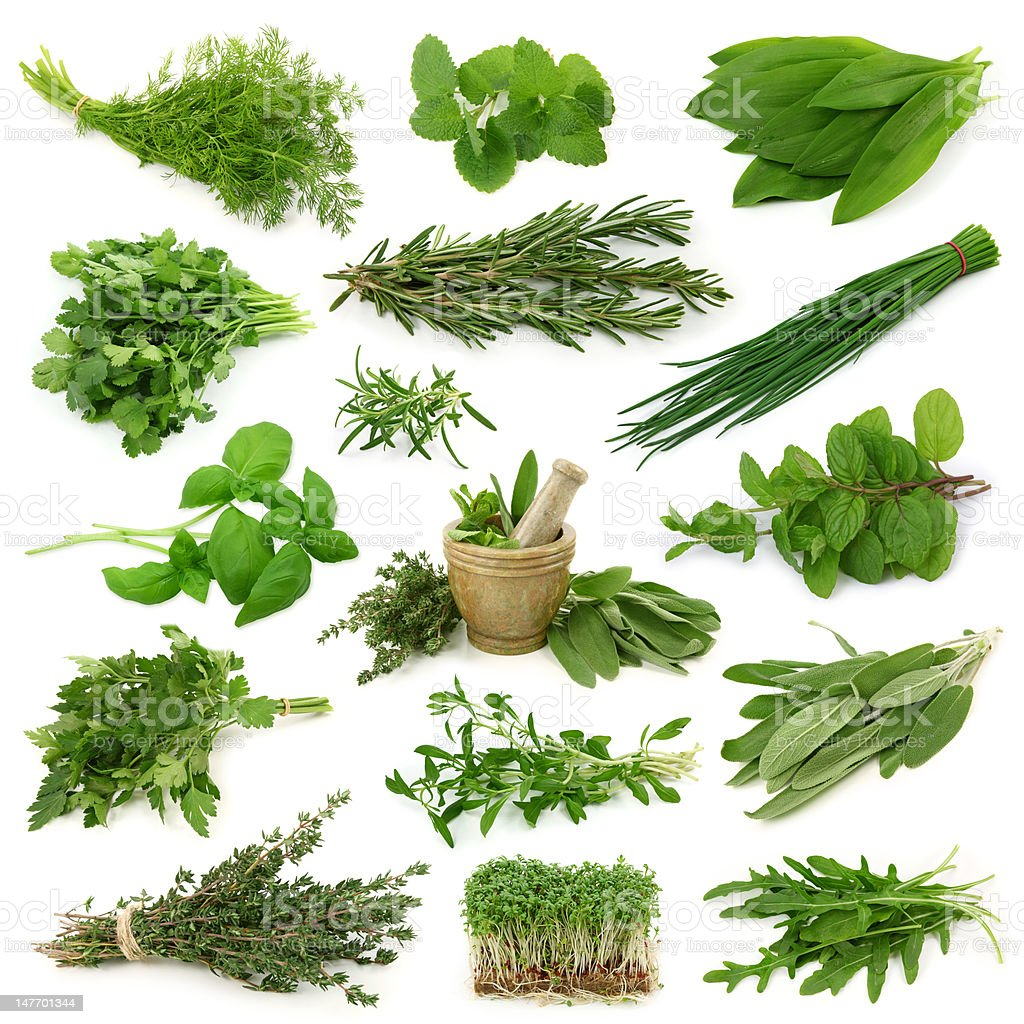 Fresh herbs collection stock photo