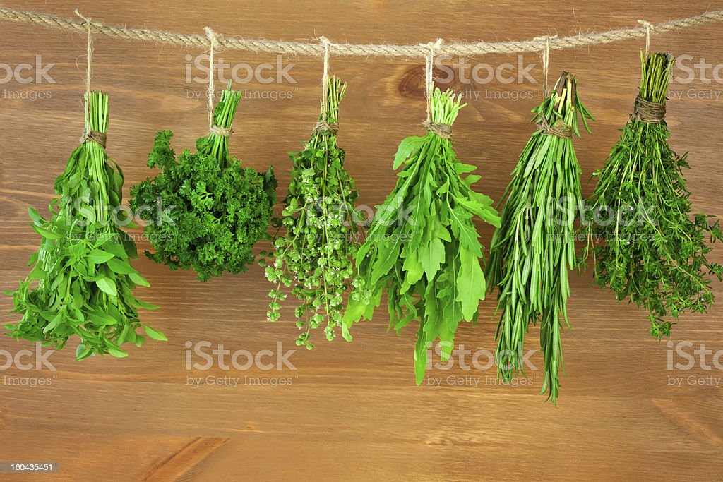 Fresh  Herbs Collection / Vintage Style royalty-free stock photo