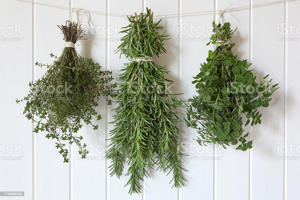 Fresh Herbs Hanging stock photo