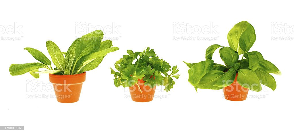 Fresh herbs in a garden pot, isolated on white royalty-free stock photo