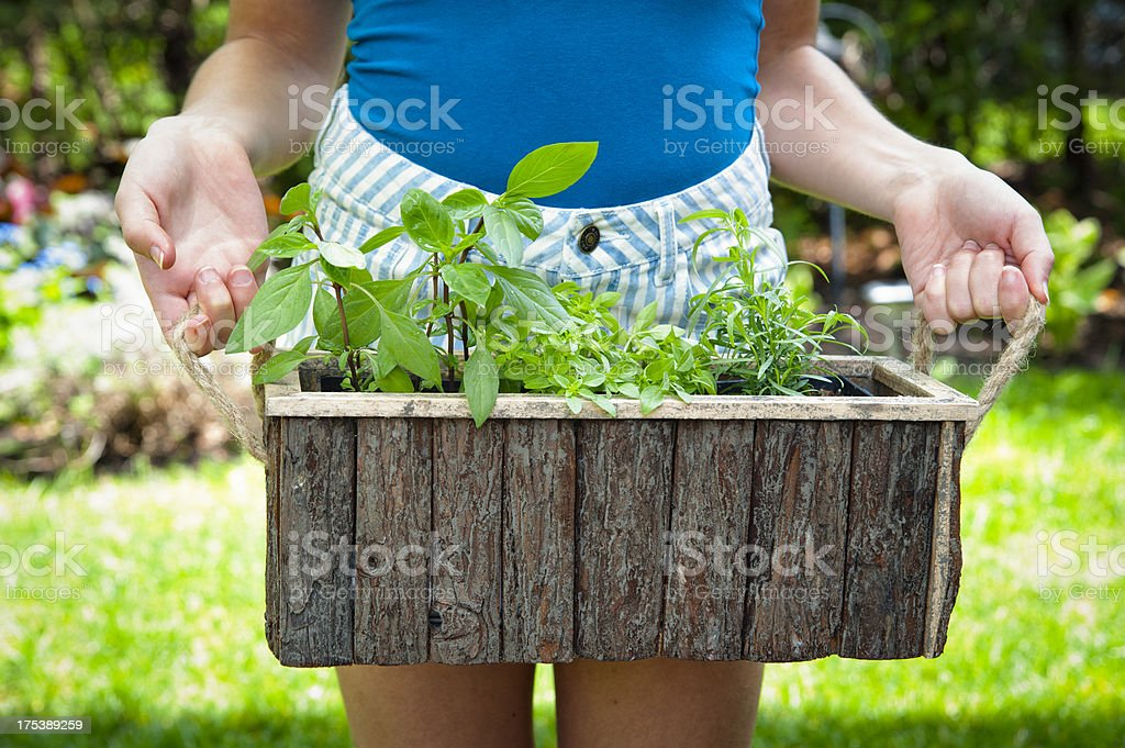 Fresh herbs in pots. royalty-free stock photo
