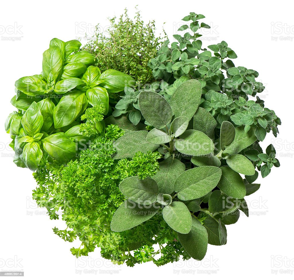 Fresh herbs isolated on white background. Food ingredients stock photo