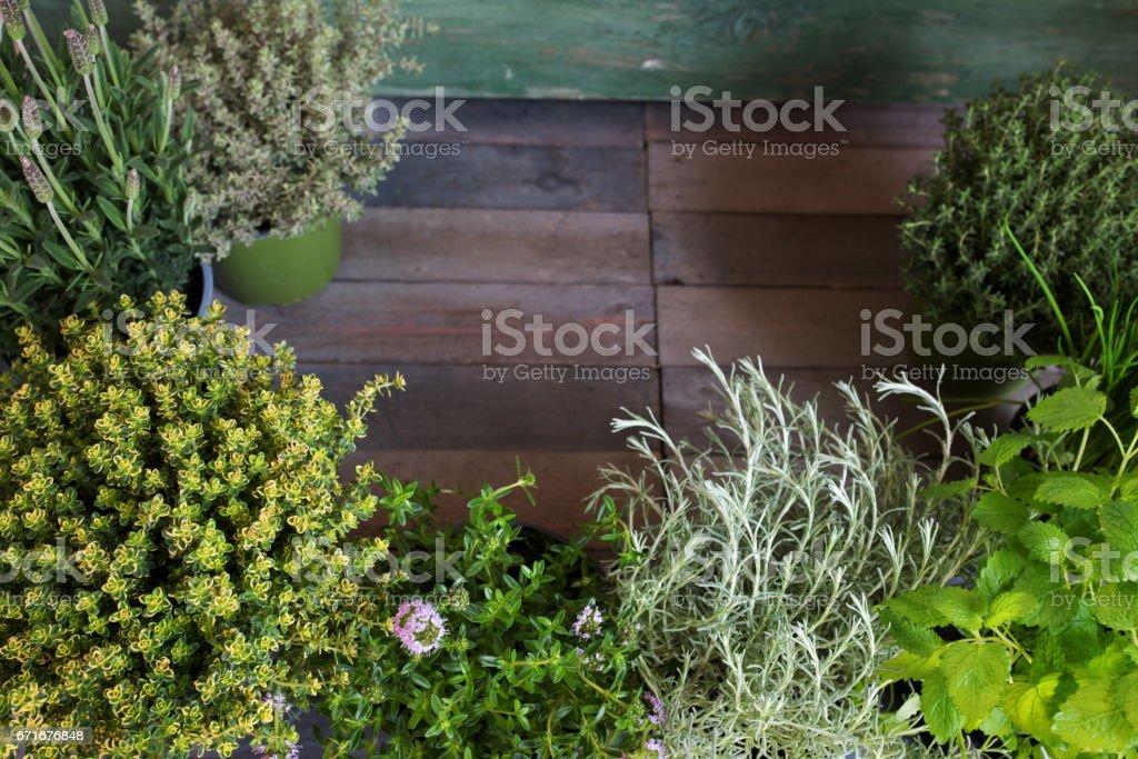 Fresh herbs on rustic wood stock photo