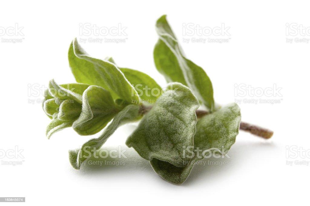 Fresh Herbs: Oregano Isolated on White Background royalty-free stock photo