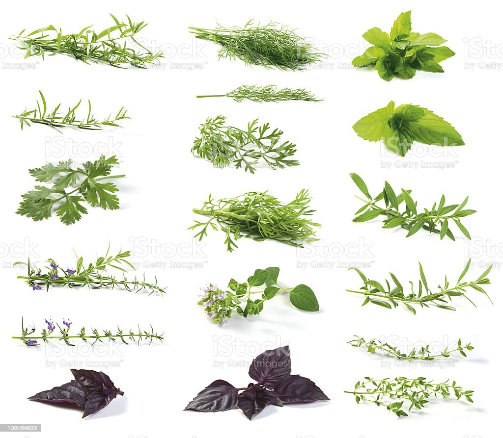 fresh herbs stock photo