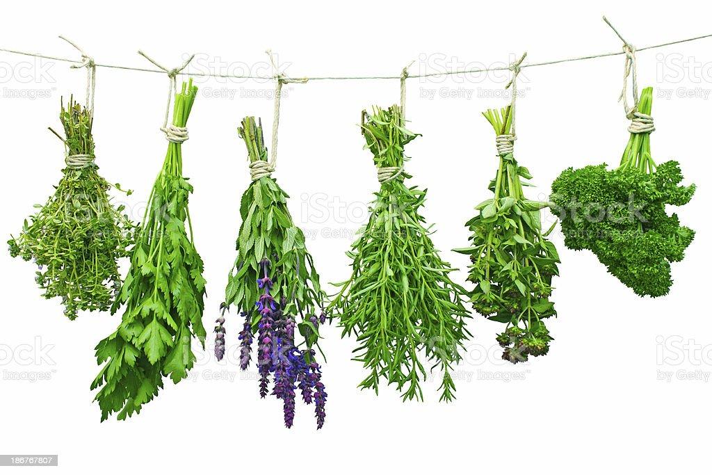 Herbes fraîches photo libre de droits