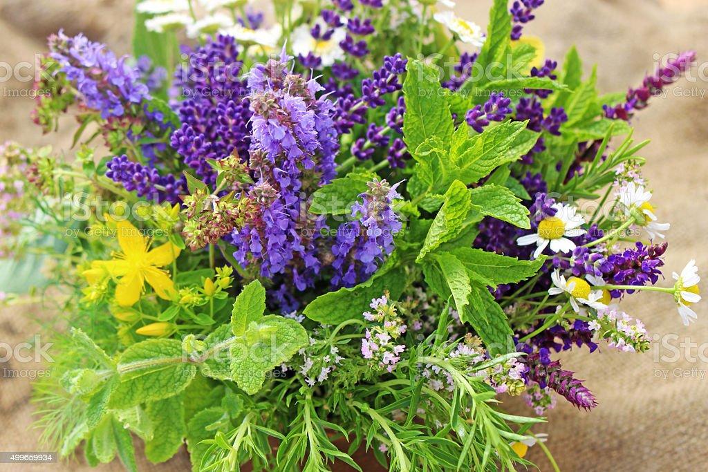 fresh herbs stock photo