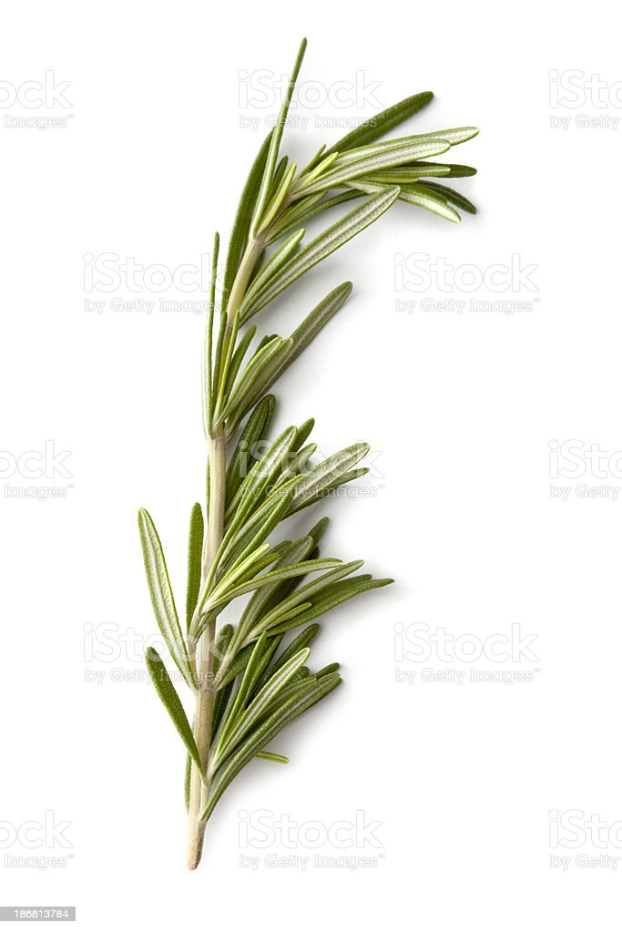 Fresh Herbs: Rosemary stock photo