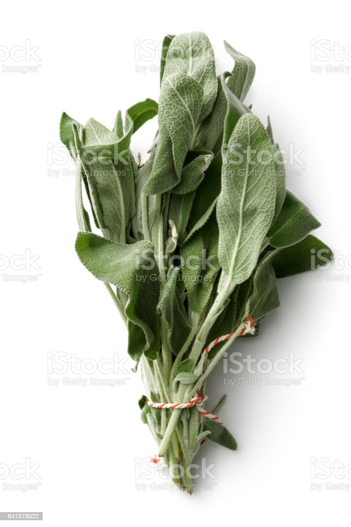 Fresh Herbs: Sage Isolated on White Background stock photo