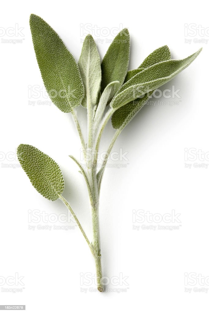 Fresh Herbs: Sage stock photo
