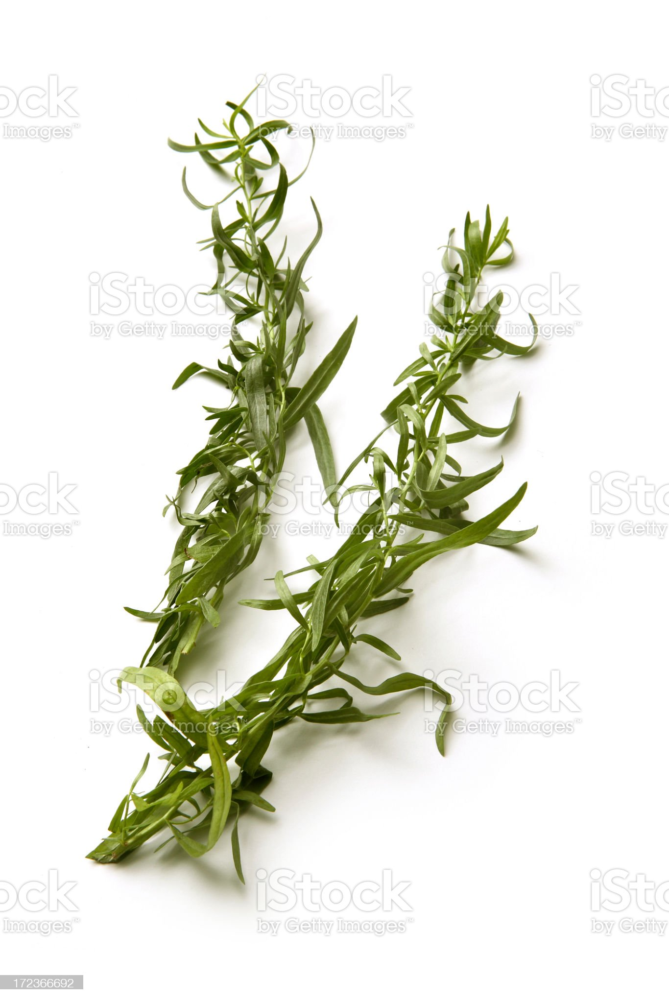 Fresh Herbs: Tarragon royalty-free stock photo