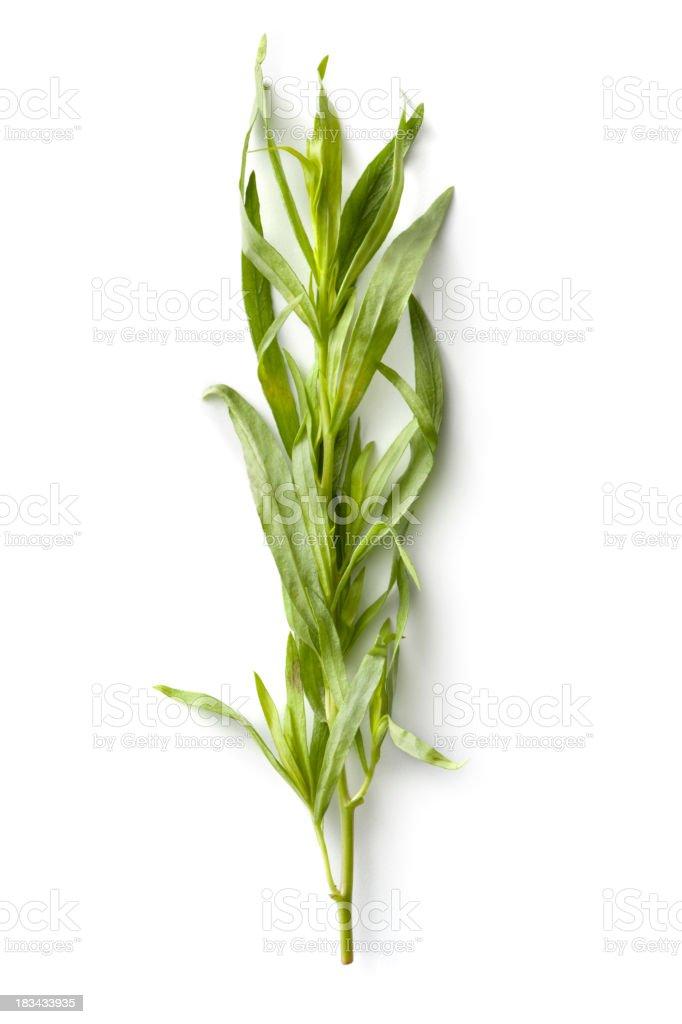 Fresh Herbs: Tarragon royalty-free stock photo