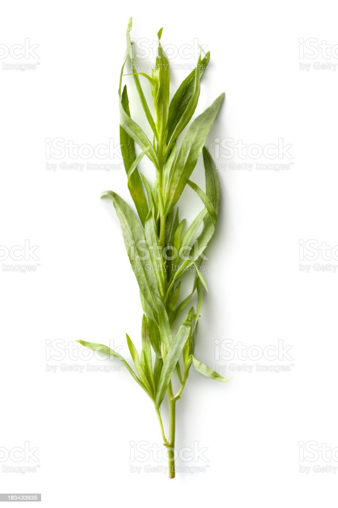 Fresh Herbs: Tarragon stock photo