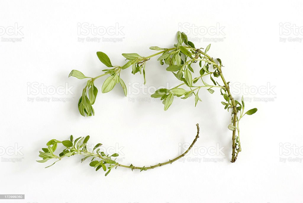 Fresh Herbs: Thyme (Thymus serpyllum) royalty-free stock photo