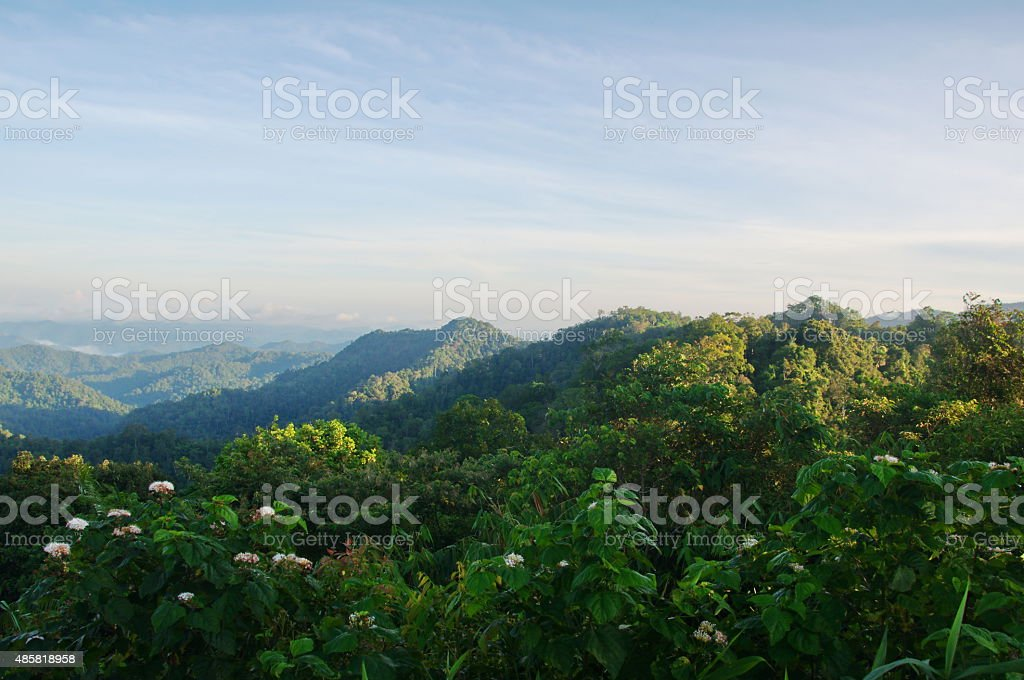 fresh hill evergreen forest with blue sky background stock photo