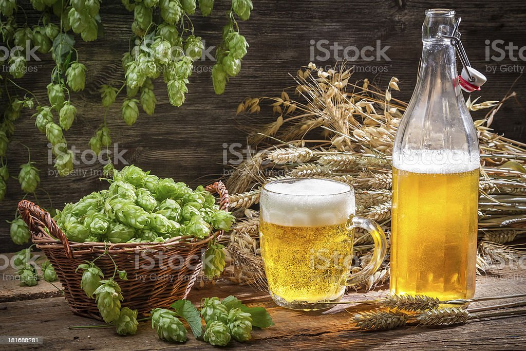 Fresh homemade beer made of hops royalty-free stock photo