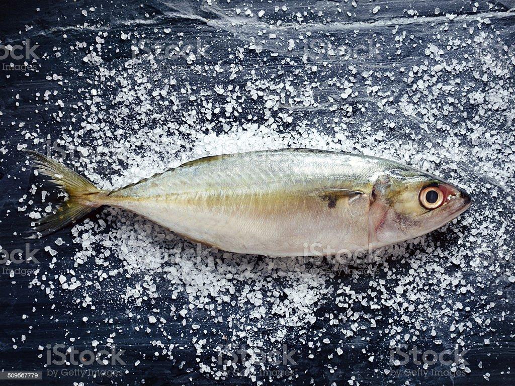Fresh Indian mackerel stock photo