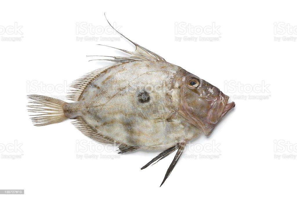 Fresh John Dory fish stock photo