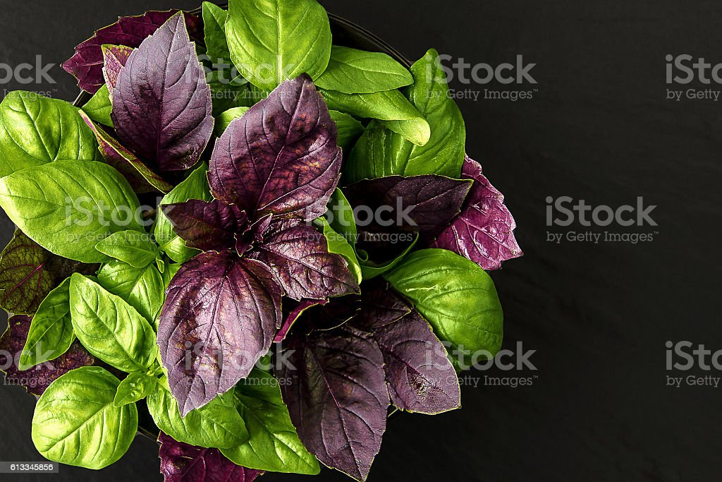 Fresh, juicy, fragrant green and red basil herb stock photo