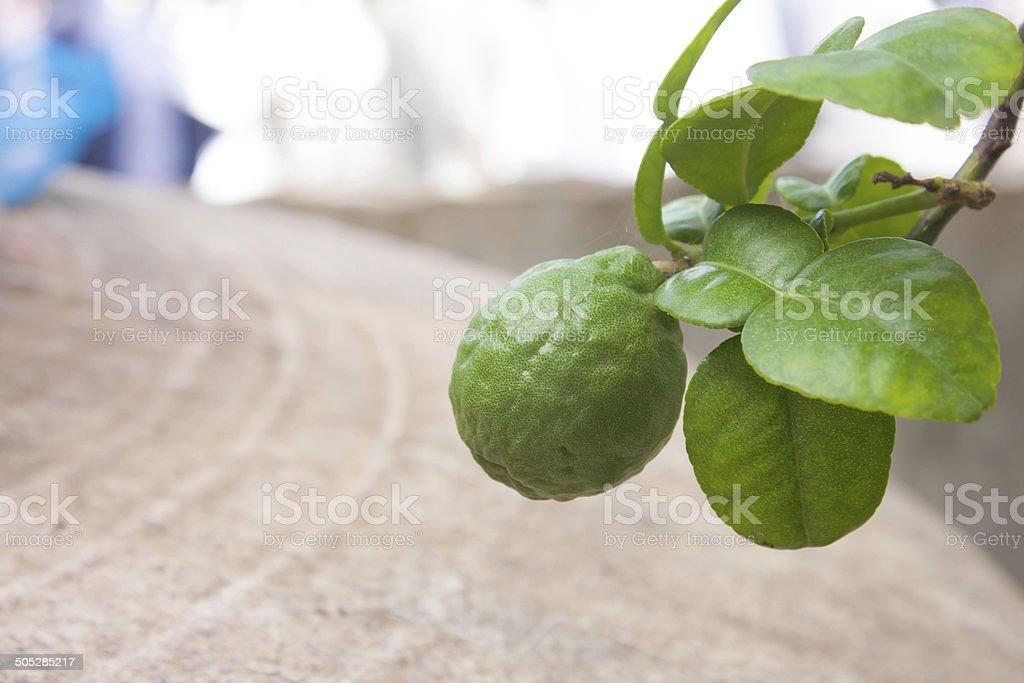 Fresh Kaffir Lime stock photo