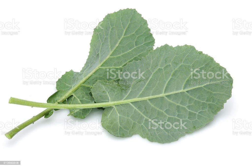 Fresh kale stock photo