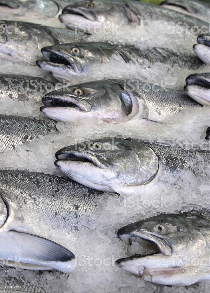 Fresh King Salmon stock photo