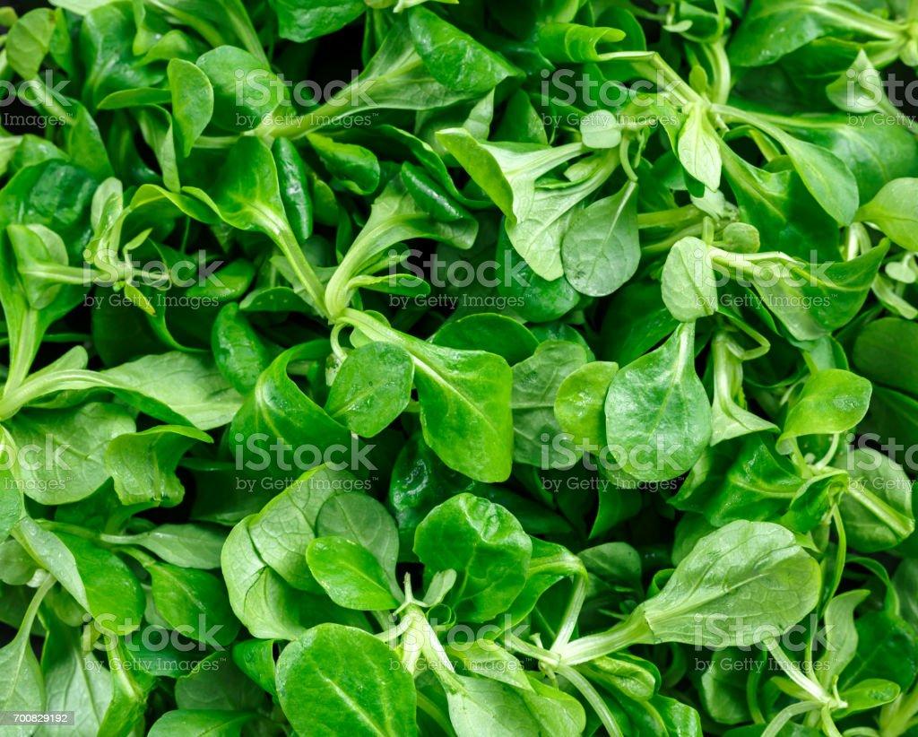 Fresh lamb lettuce corn salad on background, texture stock photo
