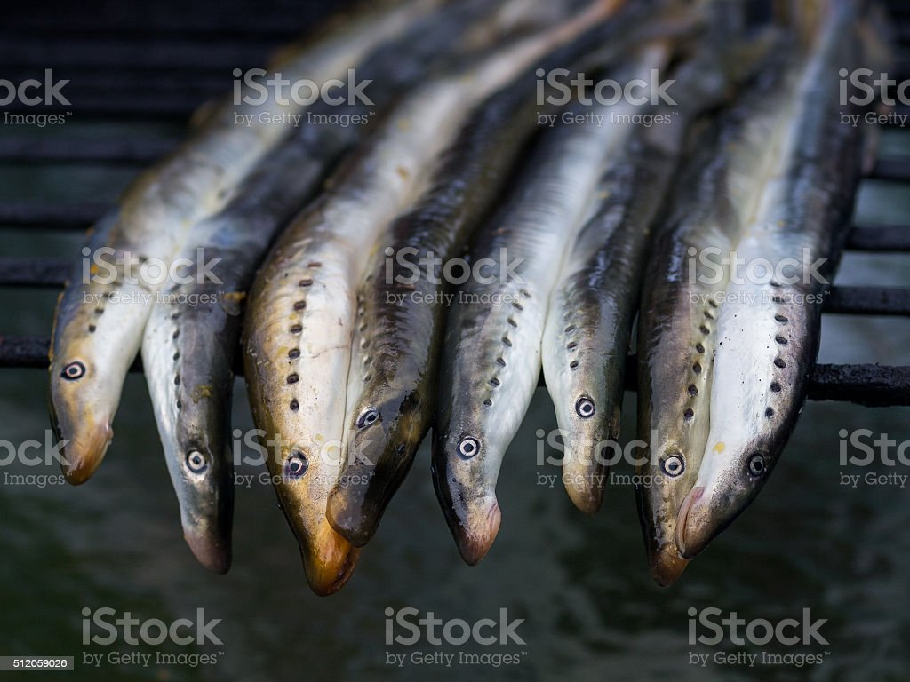 Fresh lamprey on the grill grid, close up royalty-free stock photo