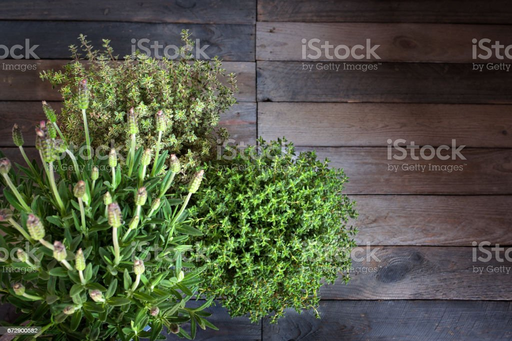 Fresh lavender and thyme stock photo