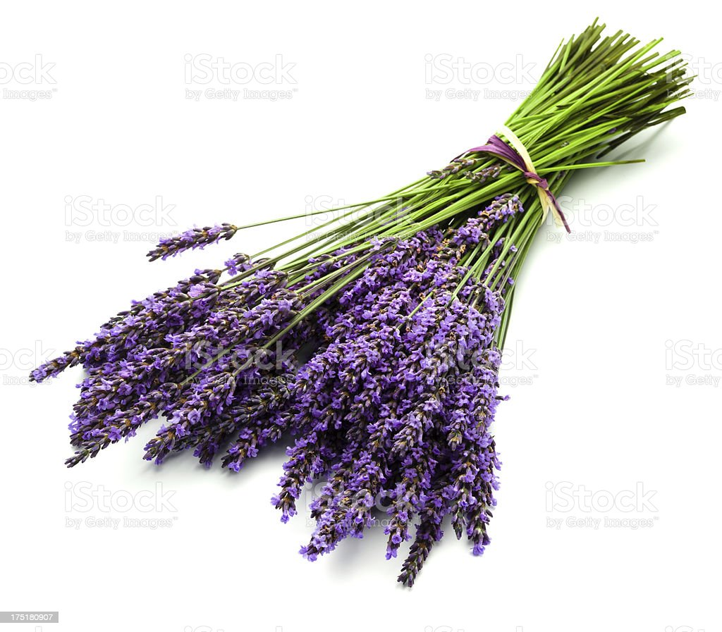 Fresh Lavender bunch stock photo