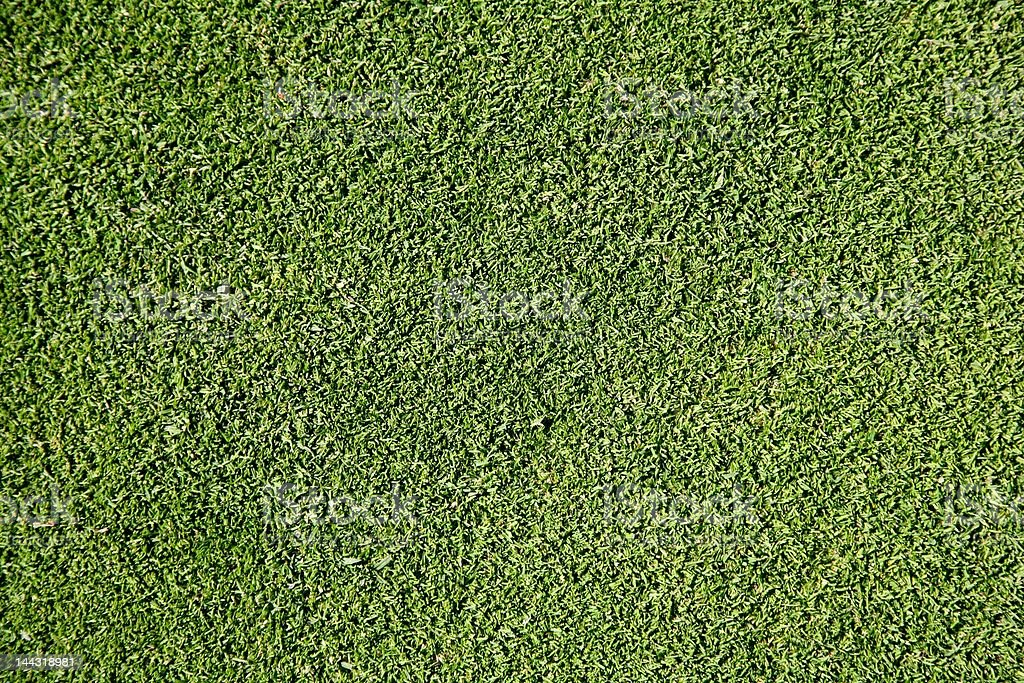 Frische Rasen Gras Lizenzfreies stock-foto
