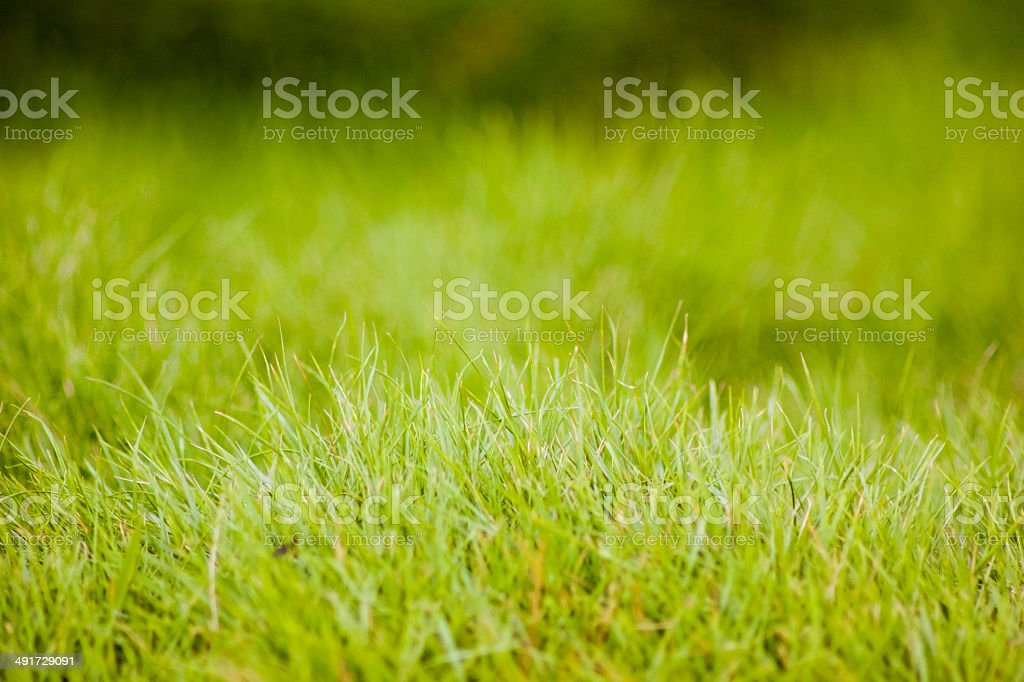fresh lawn in the morning stock photo