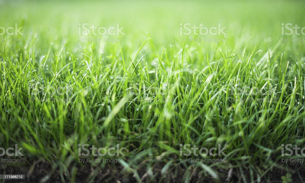 fresh lawn in the morning with dew stock photo
